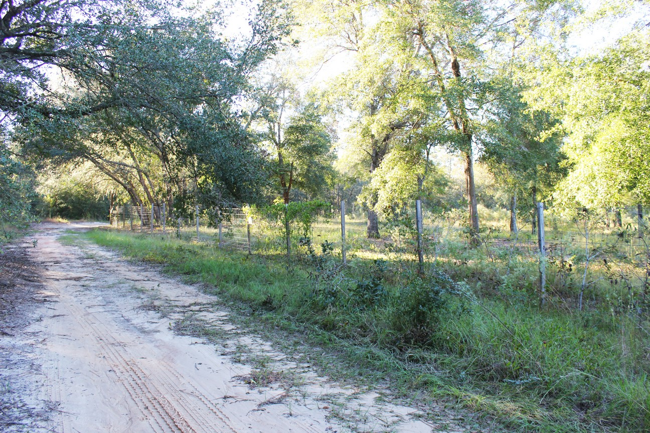 2.113 Acres-6 adjacent lots-Beautiful Piney Woods in Clay County, FL for $5K under Assessed Value
